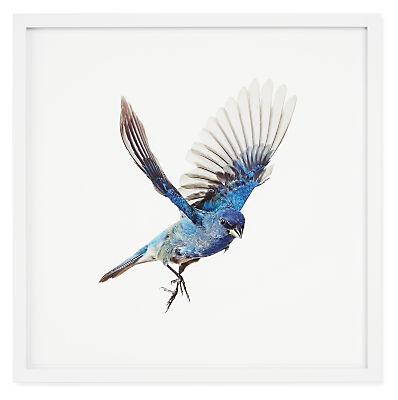 Paul Nelson, Indigo Bunting, Songbirds, 2021