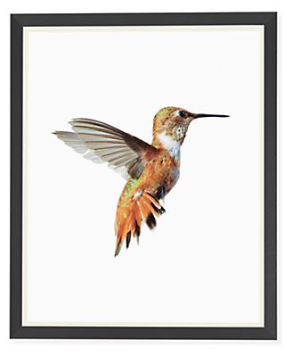 Paul Nelson, Rufous Hummingbird, 2018