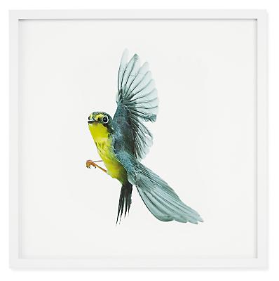 Paul Nelson, Canada Warbler, Songbirds, 2021