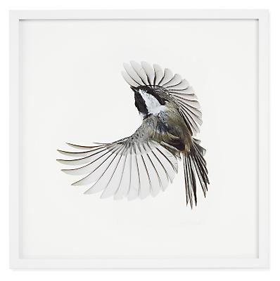 Paul Nelson, Black-Capped Chickadee, Songbirds, 2021