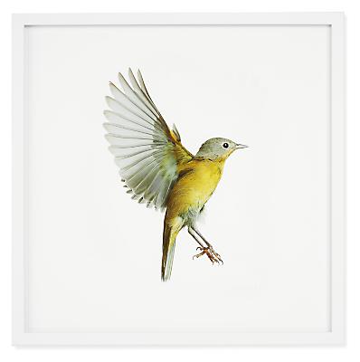 Paul Nelson, Nashville Warbler, Songbirds, 2021