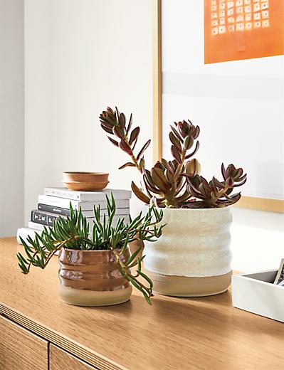 Detail of Elias planters on dresser