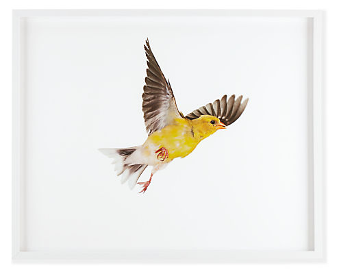 Front view of Paul Nelson, American Goldfinch I, 2010