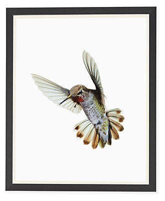 Front view of Paul Nelson, Anna's Hummingbird II, 2018