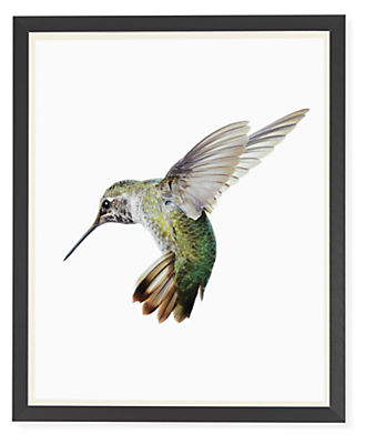 Front view of Paul Nelson, Anna's Hummingbird I, 2018