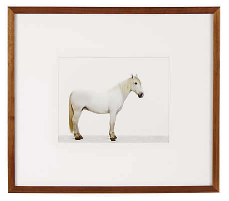 Front view of Sharon Montrose, Friesian Horse, 2013